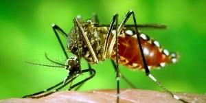 Dengue Fever – डेंगू बुखार