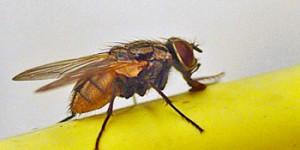 Hindi story for kids – मक्खी का लालच