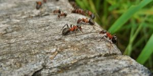 Co-evolution between Leaf-Cutter Ants and Fungus